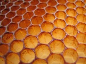 bees honey comb